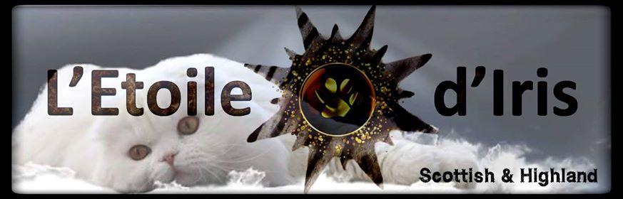 Bannière L'étoile d'iris